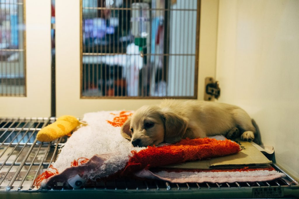 puppy on bed at shelter
